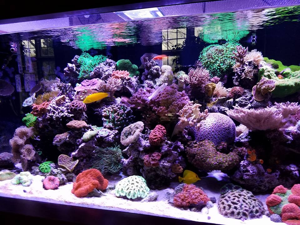 live coral sale Chicago Mundelein Lake County Waukegan Gurnee Libertyville