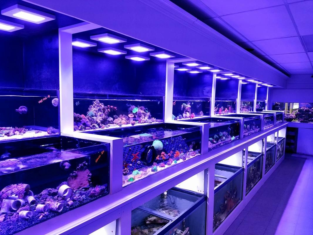 fish store Chicago Mundelein Kenosha Lake County saltwater fresh