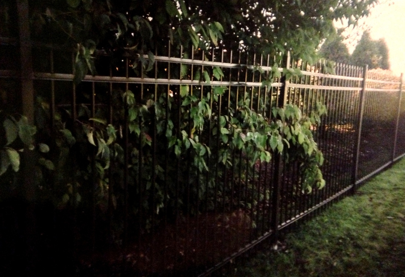 fencing company Gurnee Zion Libertyville Antioch Privacy Fence