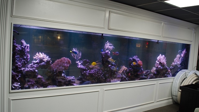 fish tank sales Chicago Mundelein Illinois Kenosha Wisconasin Sho Tank