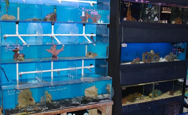 Tangs Sale Wisconsin Kenosha Fish store Good Water